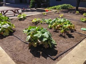 A photo of Garden 1.